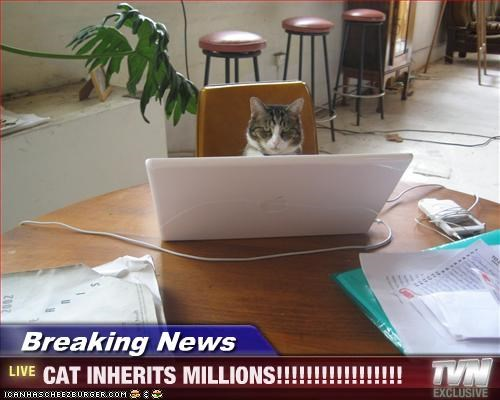 Breaking News - CAT INHERITS MILLIONS!!!!!!!!!!!!!!!!!
