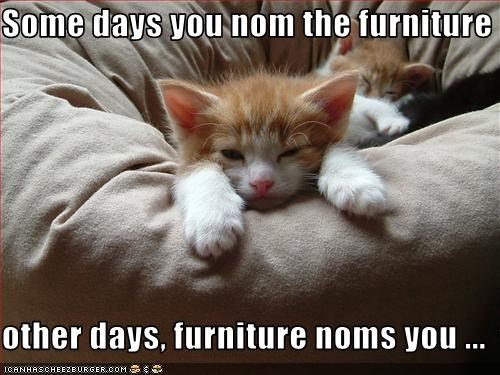 Some days you nom the furniture  other days, furniture noms you ...