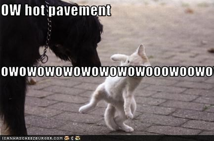OW hot pavement owowowowowowowowooowoowowow