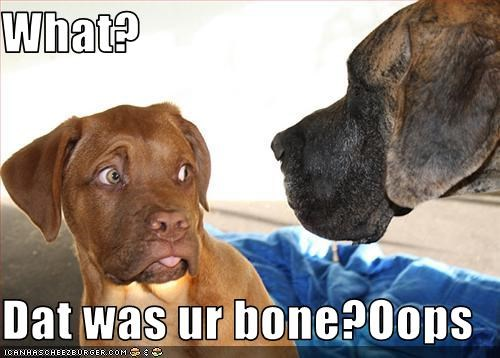 What?  Dat was ur bone?Oops