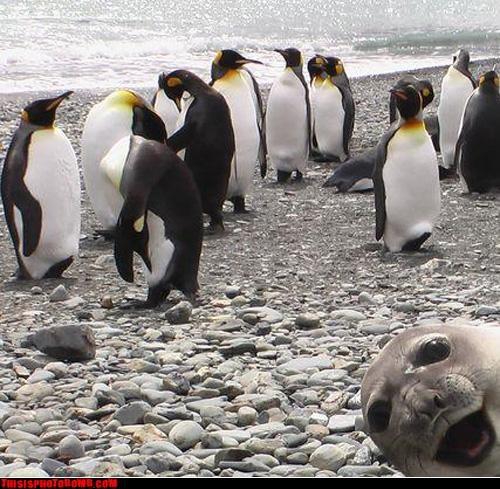 animal,Animal Bomb,awesome,crash,lol,Party,penguin,seal