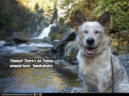 Timmy? There's no Timmy around here. *bwahahaha*
