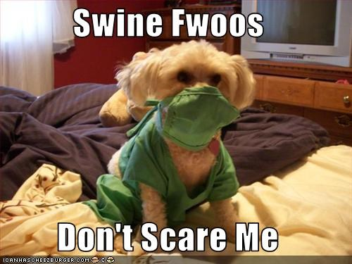bichon frise,costume,scrubs,swine flu
