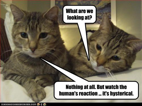 Watch the human's reaction ... it's hysterical.