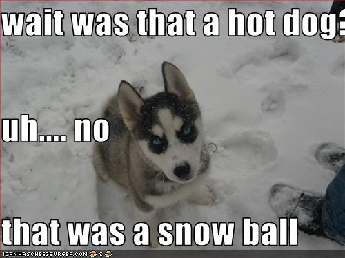 wait was that a hot dog? uh.... no that was a snow ball