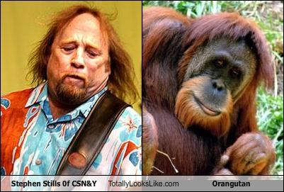 Stephen Stills Of CSN&Y Totally Looks Like Orangutan