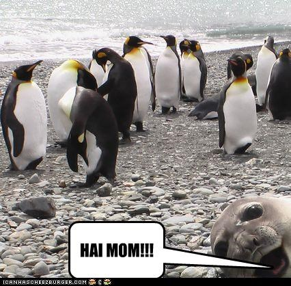 cute,lolpenguins,lolseals,Photo,photobomb,surprise
