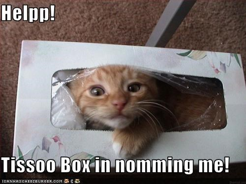 Helpp!  Tissoo Box in nomming me!