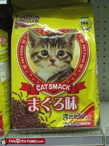 animals,cat,catnip