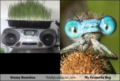 Grassy Boombox Totally Looks Like My Favourite Bug