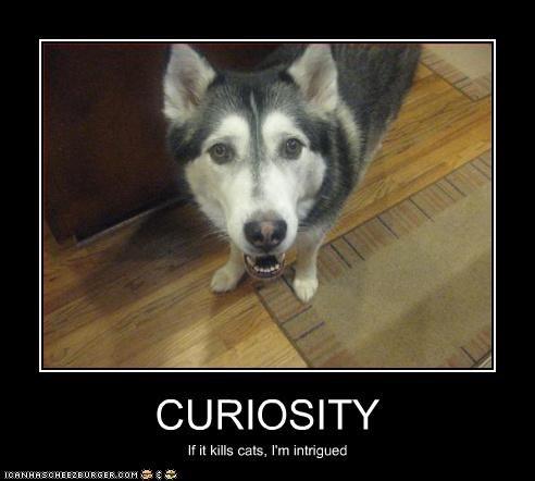 curiosity,husky,murder