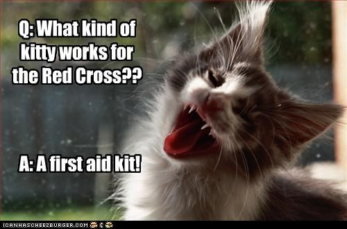 Q: What kind of kitty works for the Red Cross??