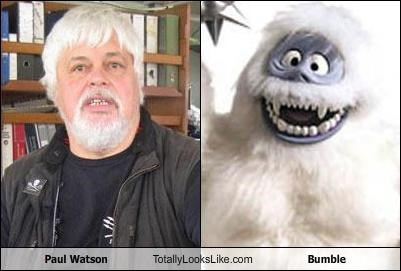 Paul Watson Totally Looks Like Bumble