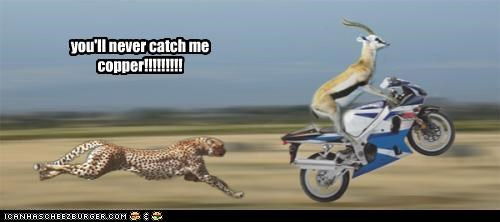 you'll never catch me copper!!!!!!!!!