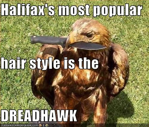 Halifax's most popular hair style is the DREADHAWK