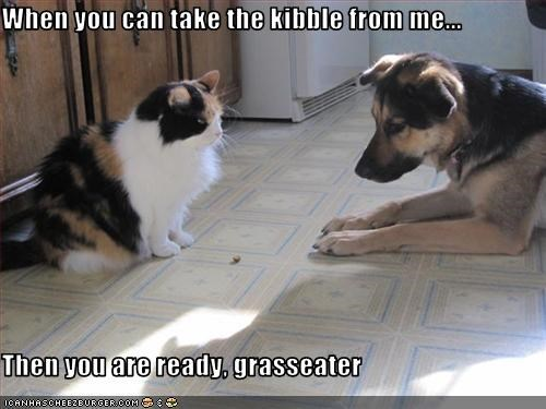When you can take the kibble from me...   Then you are ready, grasseater