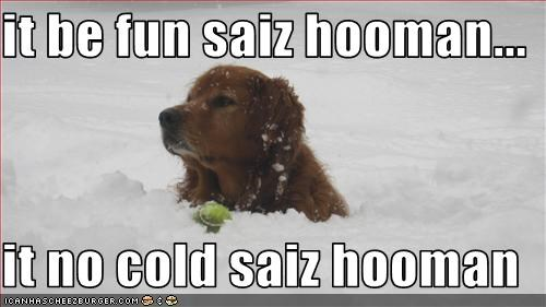 it be fun saiz hooman...  it no cold saiz hooman