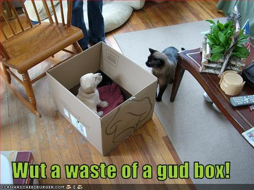 Wut a waste of a gud box!