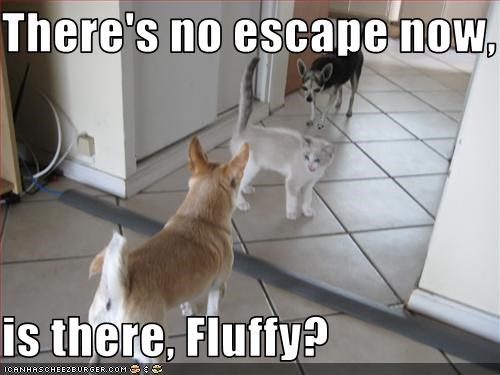 There's no escape now,  is there, Fluffy?