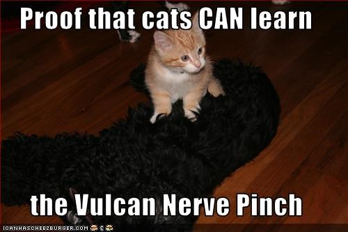 Proof that cats CAN learn  the Vulcan Nerve Pinch