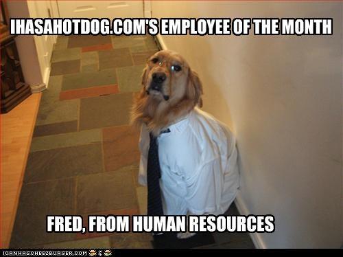 employee of the month,golden retriever,job,Office