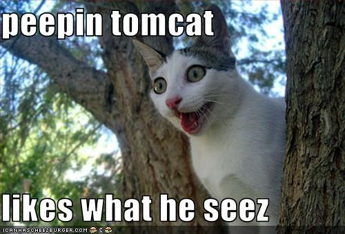 animated gifs,creepy,gifs,peeping,tomcat,tree