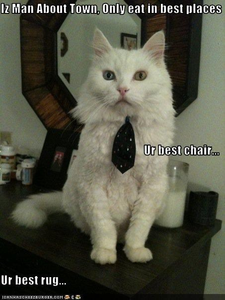 Iz Man About Town, Only eat in best places Ur best chair... Ur best rug...