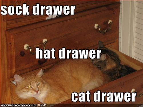 sock drawer hat drawer cat drawer