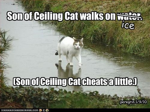 ceiling cat,cheating,ice,lies,water