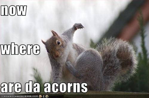 now where are da acorns