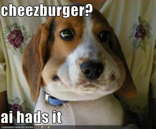 cheezburger?  ai hads it