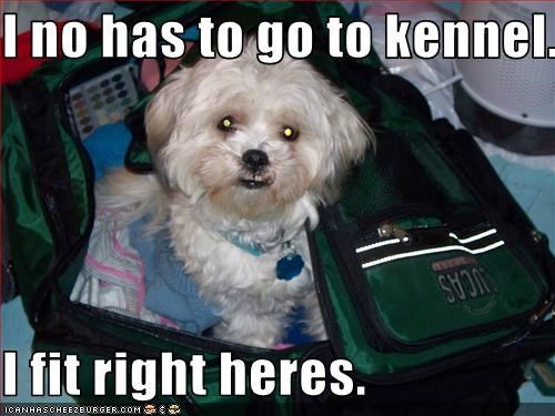 bichon frise,kennel,luggage,Travel