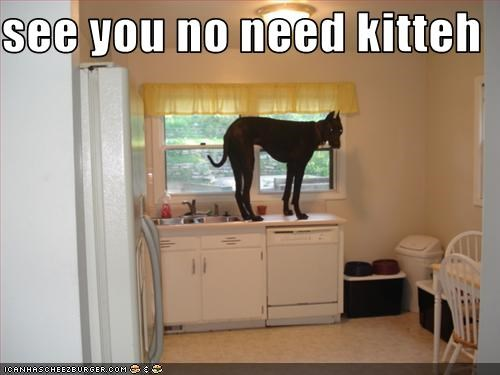 see you no need kitteh