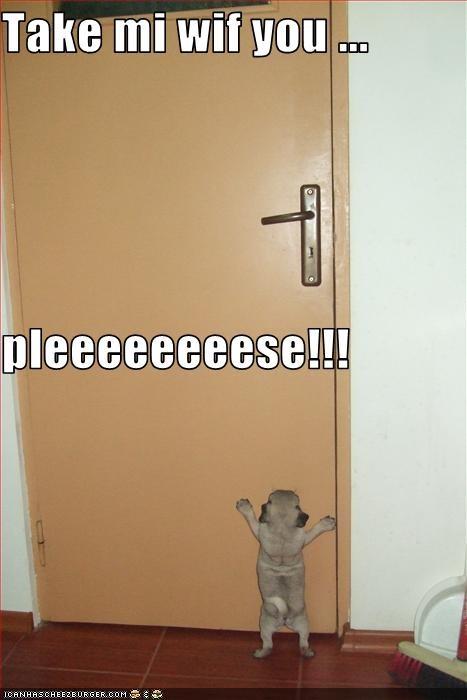 door,lonely,please,pug,puppy,Sad