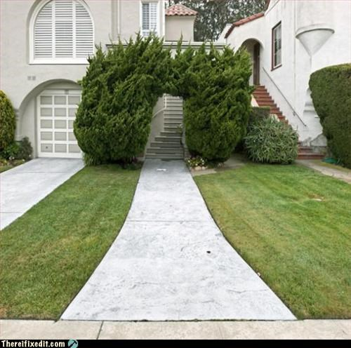 brb,narnia,overgrown,shrubbery