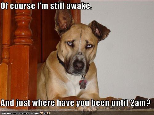 awake,waiting,whatbreed,worried