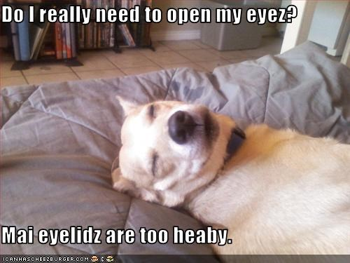Do I really need to open my eyez?  Mai eyelidz are too heaby.
