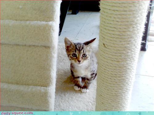 ceiling cat,kitten,sets