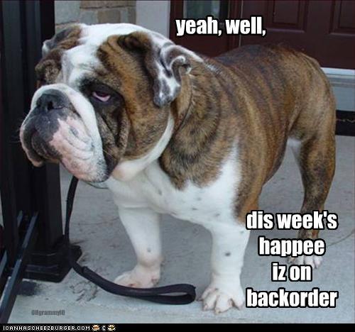 bulldog,grumpy