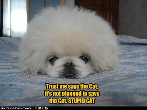 Trust me says the Cat, it's not plugged in says the Cat. STUPID CAT