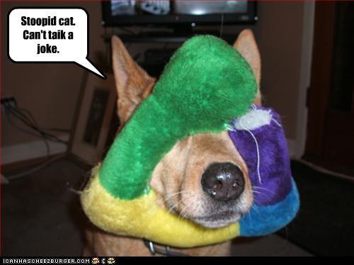 Stoopid cat. Can't taik a joke.