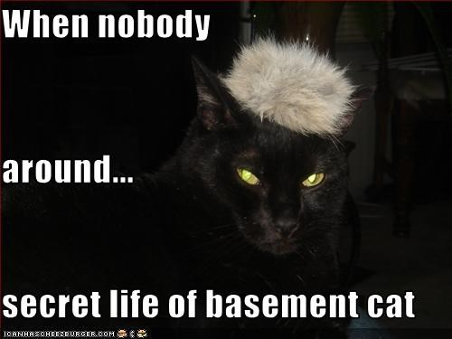 When nobody around... secret life of basement cat