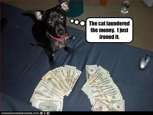 The cat laundered the money.  I just ironed it.