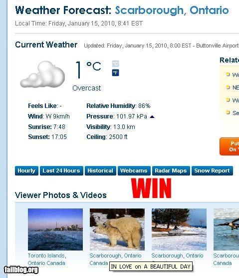 Polar Bear Win