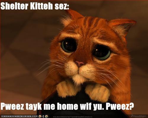 Shelter Kitteh sez:  Pweez tayk me home wif yu. Pweez?