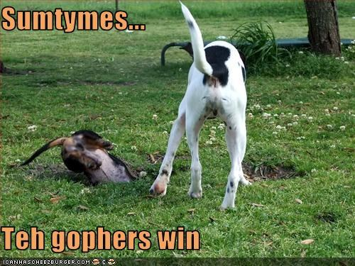 Sumtymes...  Teh gophers win