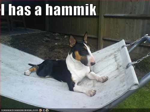 bull terrier,hammock,rest