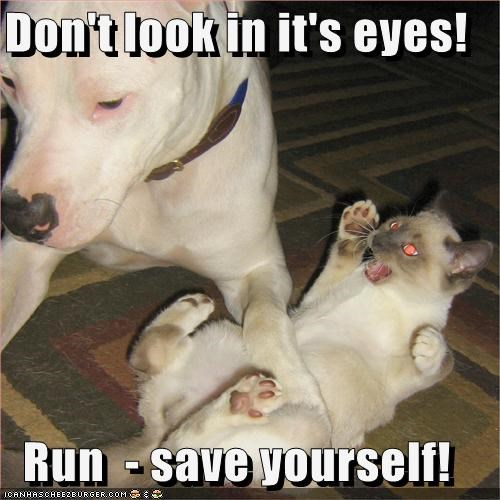 Don't look in it's eyes!  Run  - save yourself!