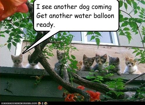 I see another dog coming Get another water balloon ready.