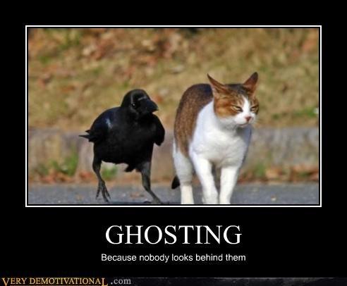 cat,ghosting,crow